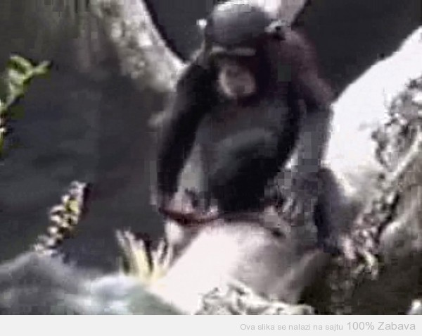 Nevaljali majmun