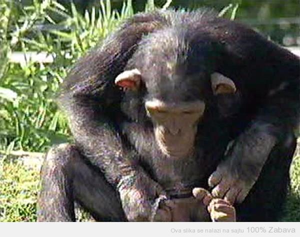 Nevaljali majmun 2