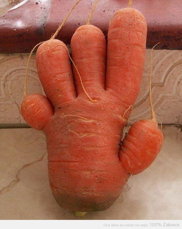Šargarepa mutant