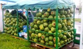 testeri-lubenice