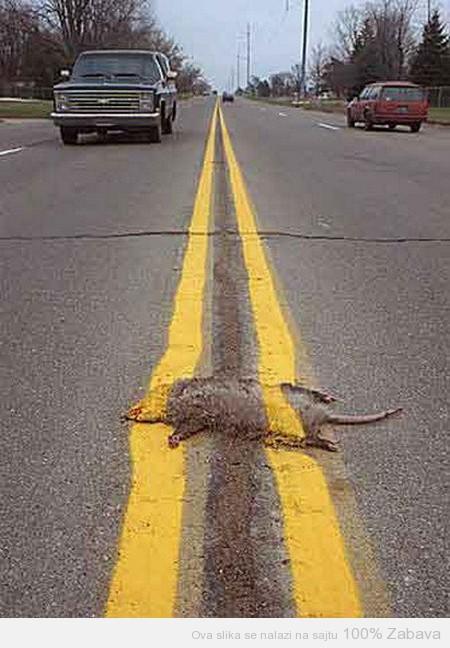 Žrtva saobraćaja