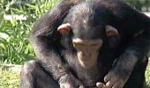 nevaljali-majmun2