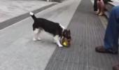 pas-se-igra-sam