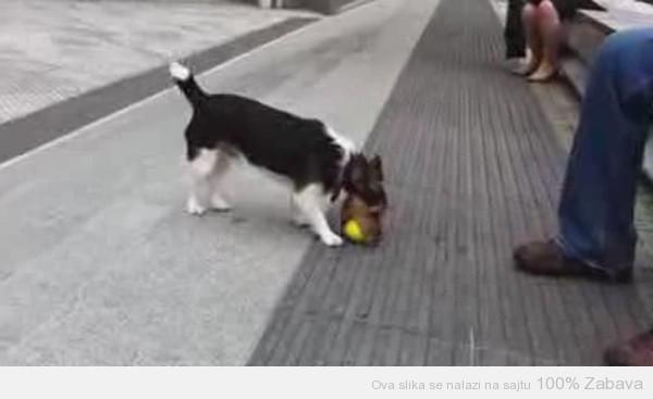Pas se igra sam sa sobom