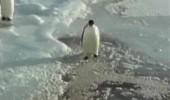 trapavi-pingvin